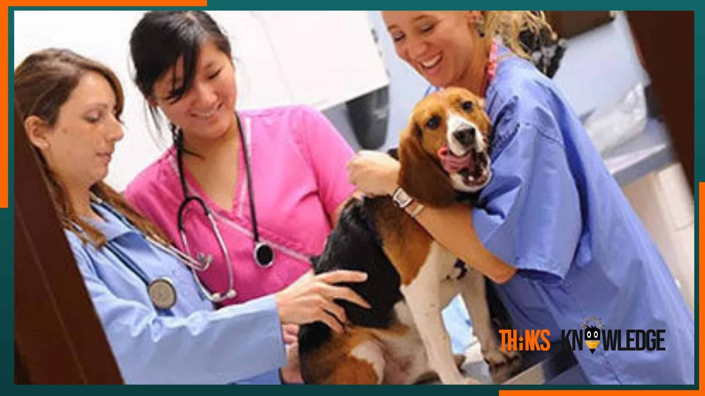 How to Become a Veterinary Doctor